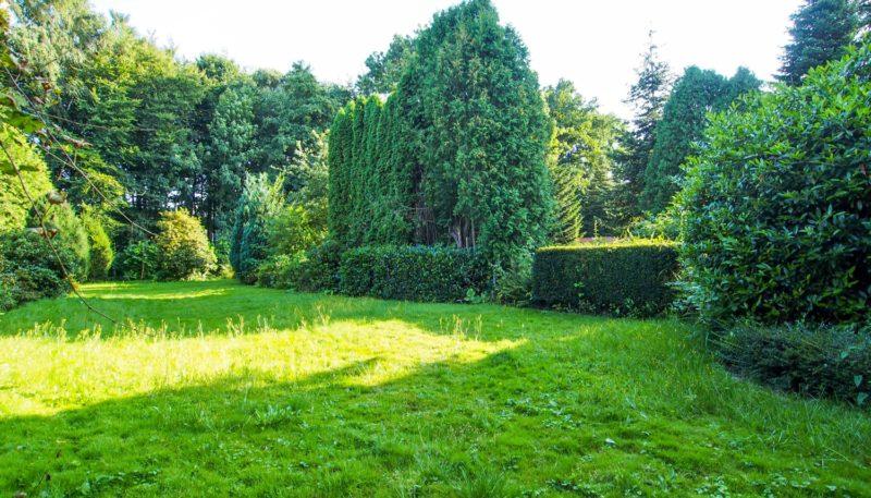11027 Garten (6)