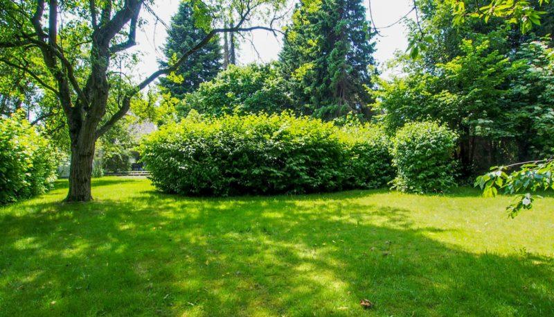 11023 Garten (5)