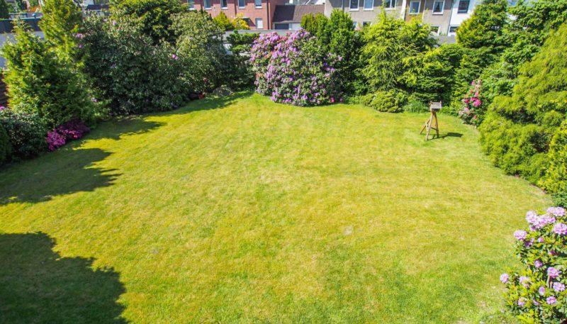 11019 Blick in den Garten (1)